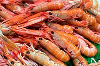 red shrimp