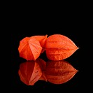Orange Physalis on a black background
