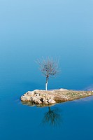Lone tree symbolic of survival.