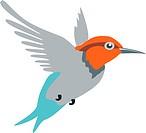 Colibri color 01