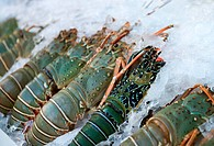 Fresh lobsters on ice