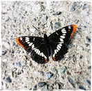 Close up of butterfly on concrete