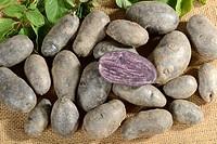 Potatoes, Violetta / (Solanumtuberosum)