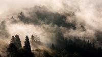 Foggy morning in Shirakawa-Go. Japan.