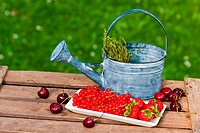 Fruits with watering can