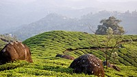 Munnar, A Hill Station Covered With Lush Green Tea Gardens, Top Station, Kerala, India