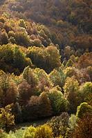 Parco Nazionale d'Abruzzo y Molise, Abruzzo province, Italy.