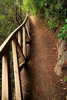 detail of path in Ruiz ravine. Tenerife island. spain