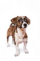 A puppy in a studio setting.