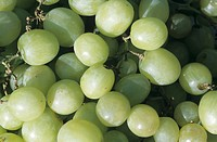 White Seedless Grapes, close up