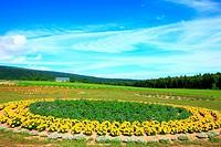 Flower field at Rokugou Observatory, Hokkaido