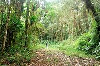Backpacker, San Eusebio Cloud Forest Merida Venezuela