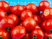 wet cherry tomato in packing case
