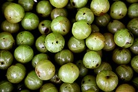 A close-up of Indian gooseberries (Emblica officinalis) also known as Amla. Besides being a common ingredient in many Indian culinary dishes and foods...