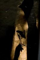 shadow female hand with high-heel  - 18/12/2007