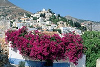 Greece, Symi, Chorio, pastel-coloured houses on the hillside overlooking Symi's harbour, pink-flowered bush in foreground.