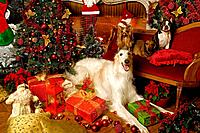 Dogs - Borzoi / Russian Wolfhound, Boston Terrier, Dachshund / Teckel and Yorkshire Terrier with Christmas decorations