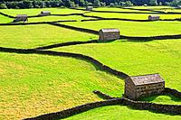 Field barns in Gunnerside, Swaledale, Yorkshire Dales, England, UK.