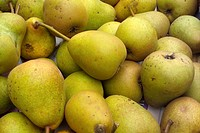 Pears fresh product from small home organic orchard.