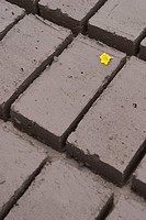 Yellow flower head on cement bricks