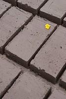Yellow flower head on cement bricks