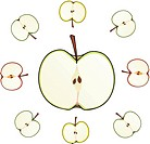 apple cut isolated illustration