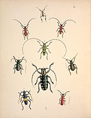 Plate 29 from Cabinet of Oriental Entomology, 1848 by John Obadiah Westwood (1805-1893).