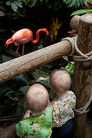 Identical twin sisters look at a flamingo in a jungle.