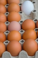 eggs on a market - 15/08/2007