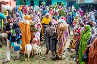 Chat market in the town of Aweday, Ethiopia, Africa.