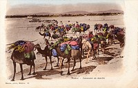Algeria - Biskra - Camel Caravan on the move