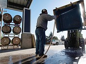 Man cleaning tub with water hose at winery, Paso Robles, California.