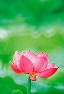 flower,spring