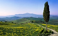 Landscape in the Val d'Orcia with Monte Amiata, Tuscany, Italy, Europe / Landschaft im Val d'Orcia mit dem Monte Amiata, Toskana, Italien, Europa