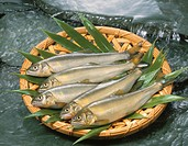 Basket of sweetfish in a flowing stream