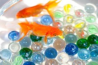 Goldfishes swimming in fishbowl