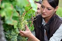 Woman pruning vine