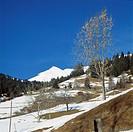 Schweiz, CH-Sankt Peter (Graubuenden), Plessur, Schanfigg, Kanton Graubuenden, Berglandschaft im Winter, schneebedeckt, Switzerland, CH-Saint Peter (G...