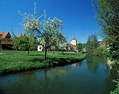 D-Hersbruck, Pegnitz, Naturpark Fraenkische Schweiz-Veldensteiner Forst, Fraenkische Alb, Mittelfranken, Bayern, Stadtgraben, Wassertor, Bluete D-Hers...
