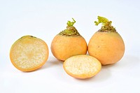 Golden Ball Turnip (Brassica rapa var.rapa esculenta). Three roots. Studio picture against a white background