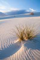 A Yucca plant pokes through the sand during a colourful sunset at White Sands National Monument at sunset in Alamogordo, New Mexico, USA.