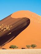 Namibia, Sossusvlei Dunes, Trees in desert
