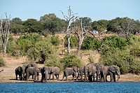 From Victoria Falls is possible to visit the nearby Botswana. Specifically Chobe National Park. Chobe National Park. The Chobe National Park is locate...