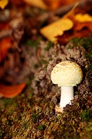 White mushroom on forest outdoor nature