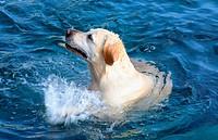 Water loving splashing dog