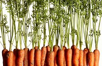 Cropped shot of a row of fresh carrots