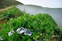 Fog in the caldeira of Faial island, Azores, Portugal.