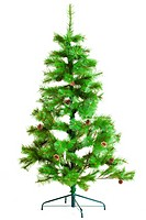 pine tree. Christmas tree isolated on white backgr