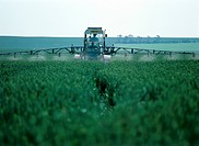 Spraying Wheat Crop