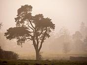 Trees in misty winter weather.